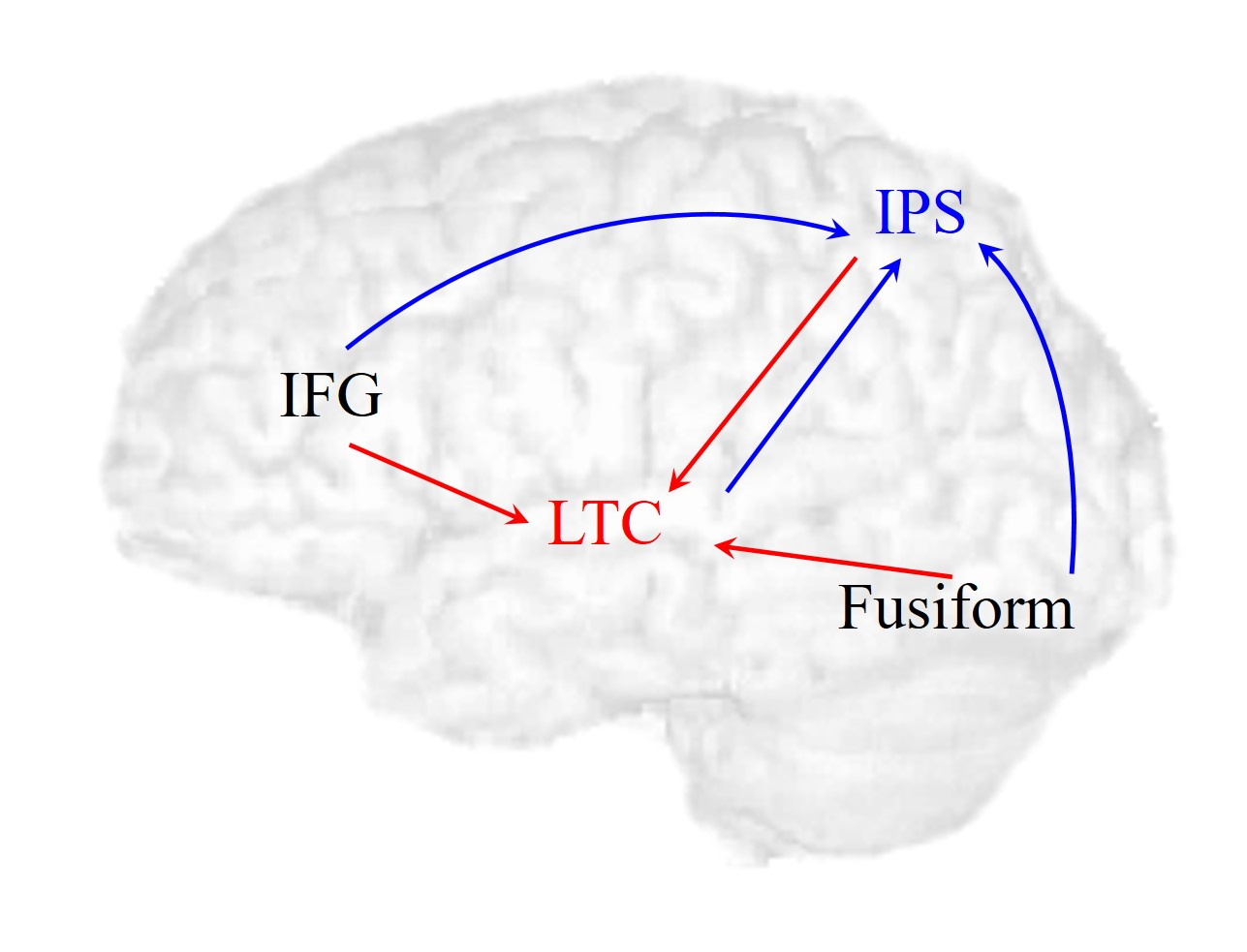 The Language and Brain Plasticity Lab | PI: Dr. Tali Bitan